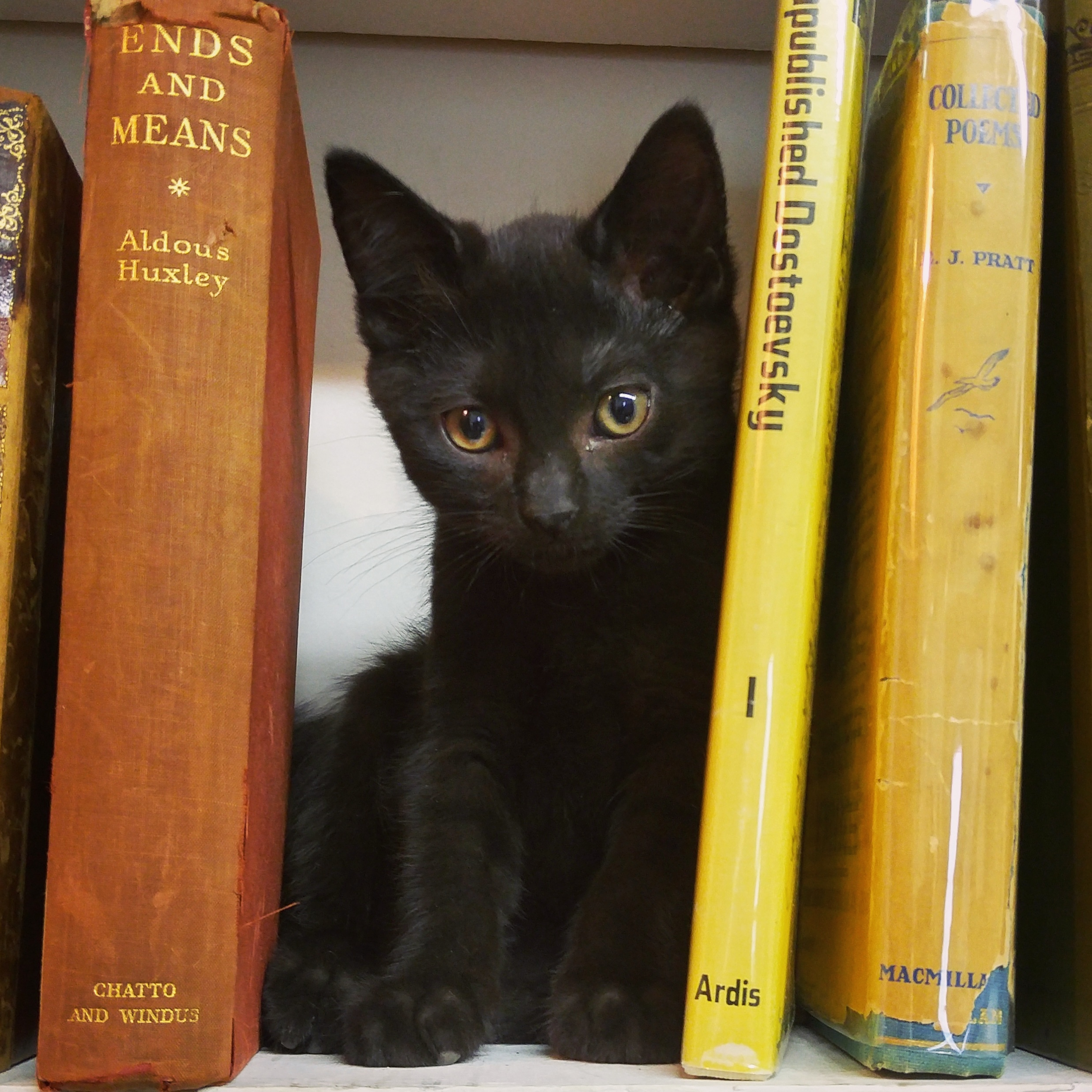 Frodo has fine taste in literature! Nestled right in between Huxley and Dostoevsky!