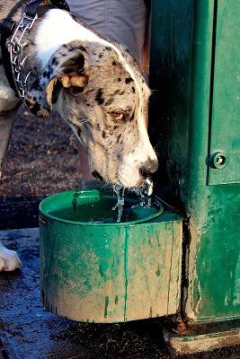 b+drinking+fountain5.jpg