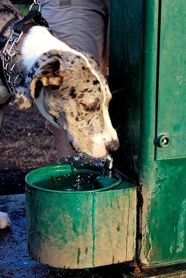 b+drinking+fountain.jpg