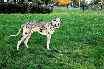 Barnaby+park+Oct12.jpg