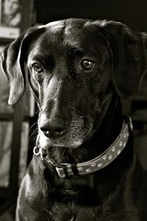 sadie+portrait.jpg