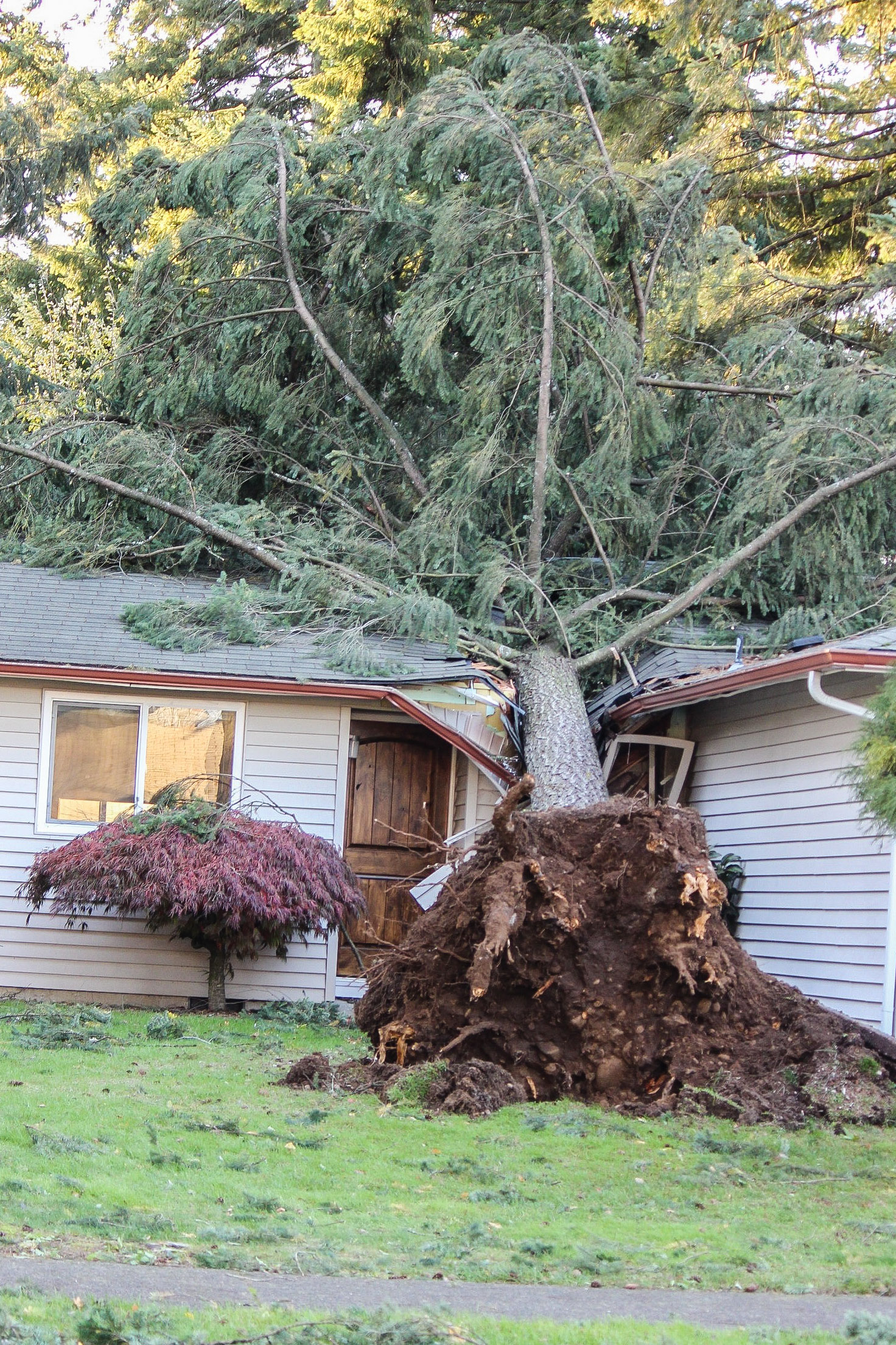 Ouch! This tree fell within three blocks of our home. Repairs are already underway.