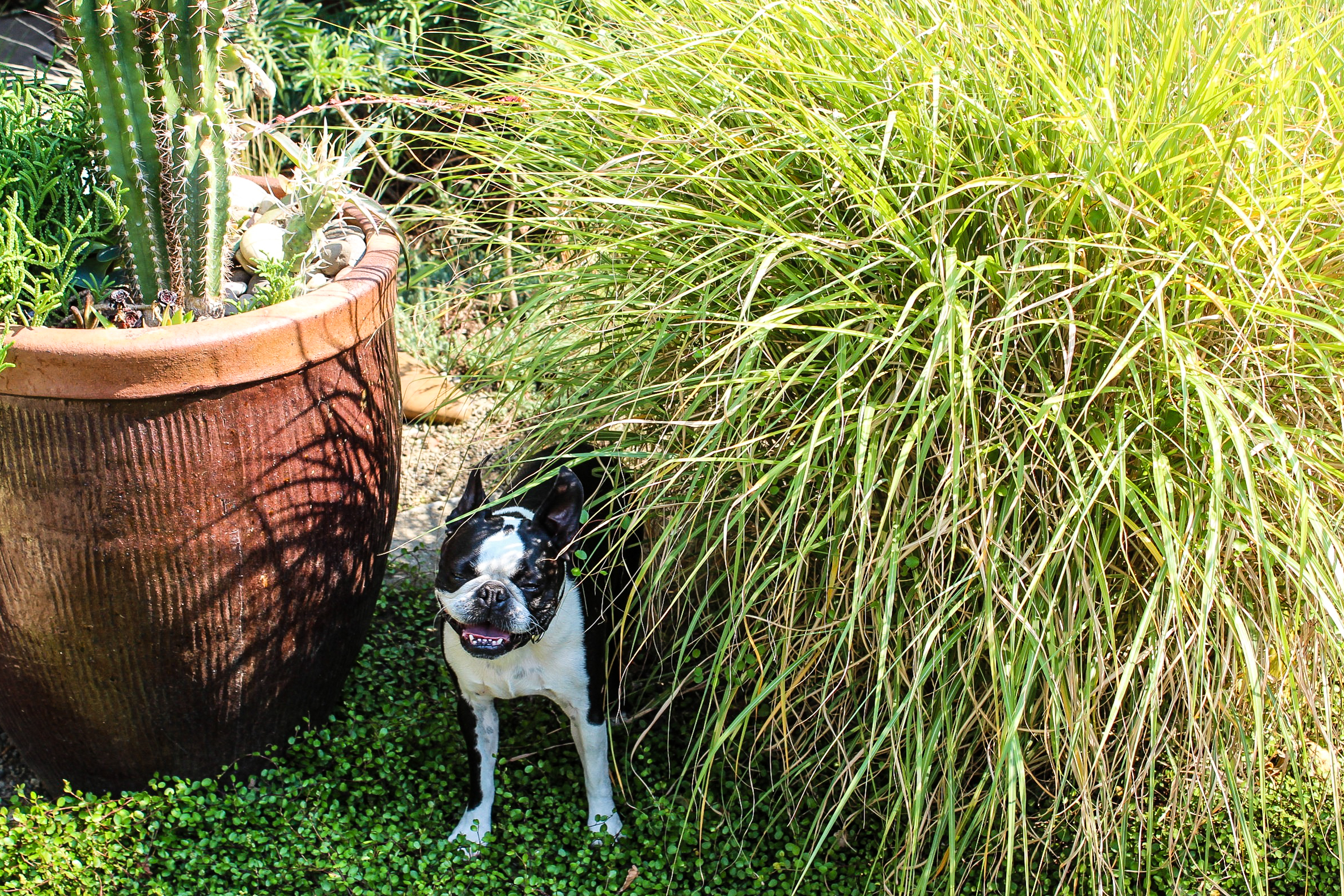 Rosie gave me a tour of her favorite shady spots in the garden.