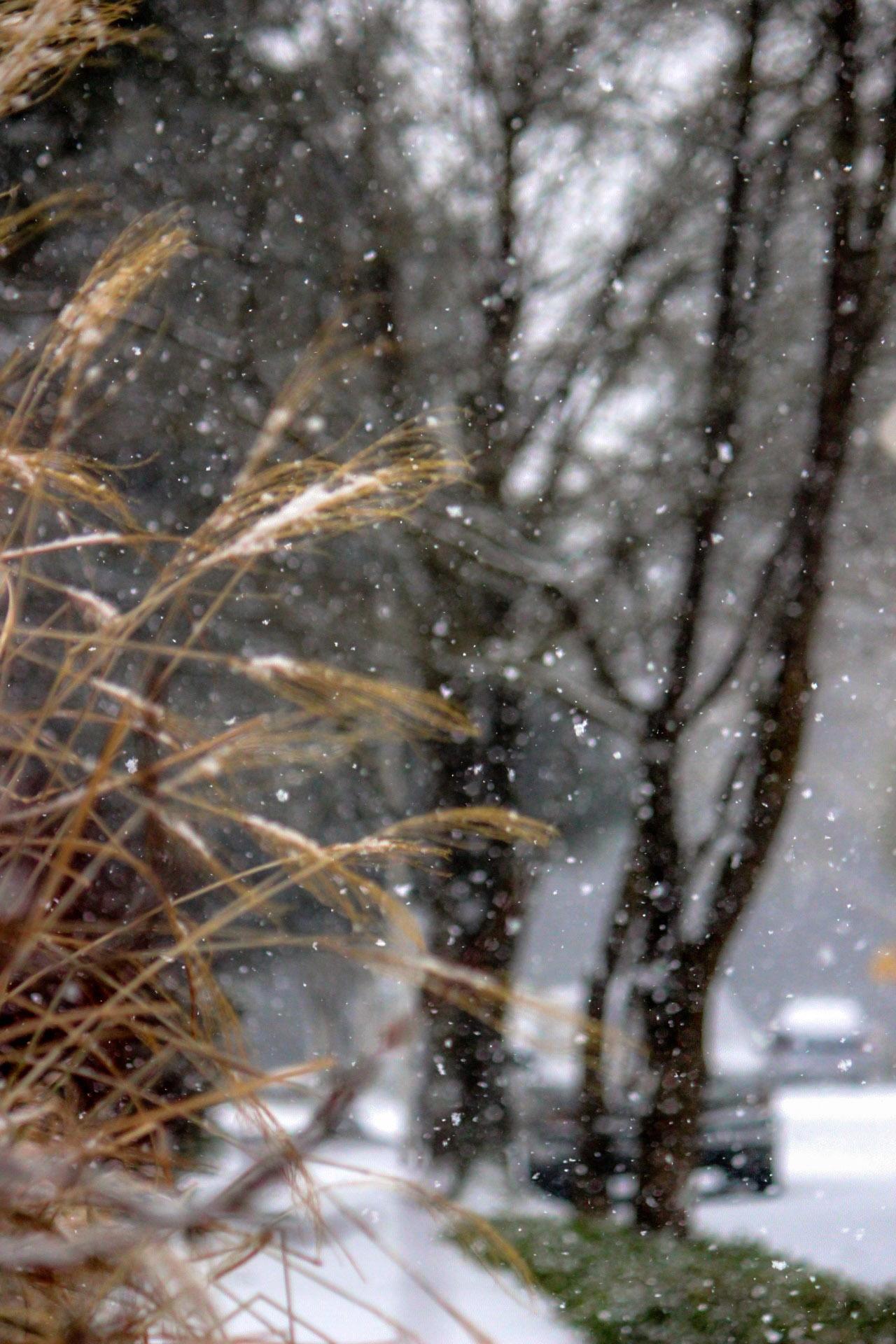 snowgrassstreet1.jpg