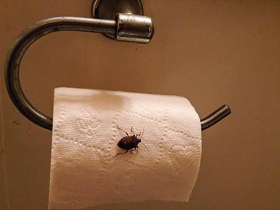 Look before you wipe!