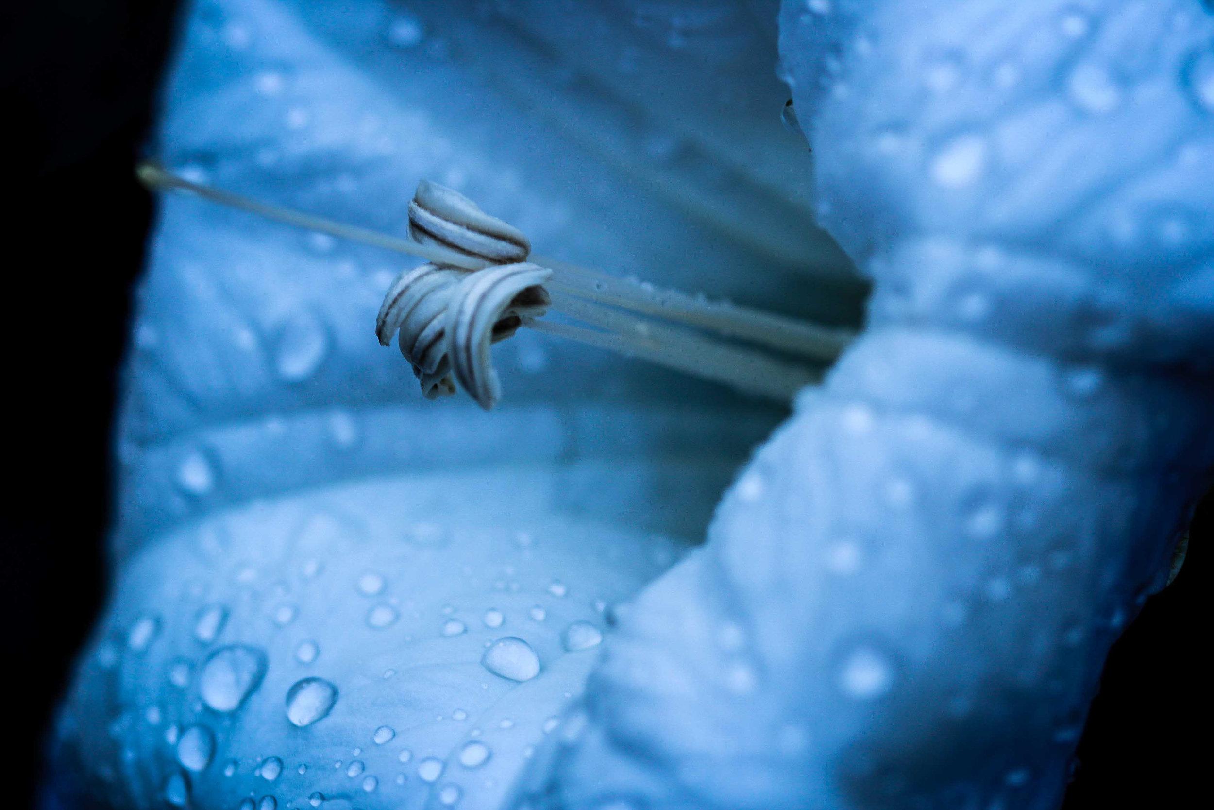 blueflower5.jpg