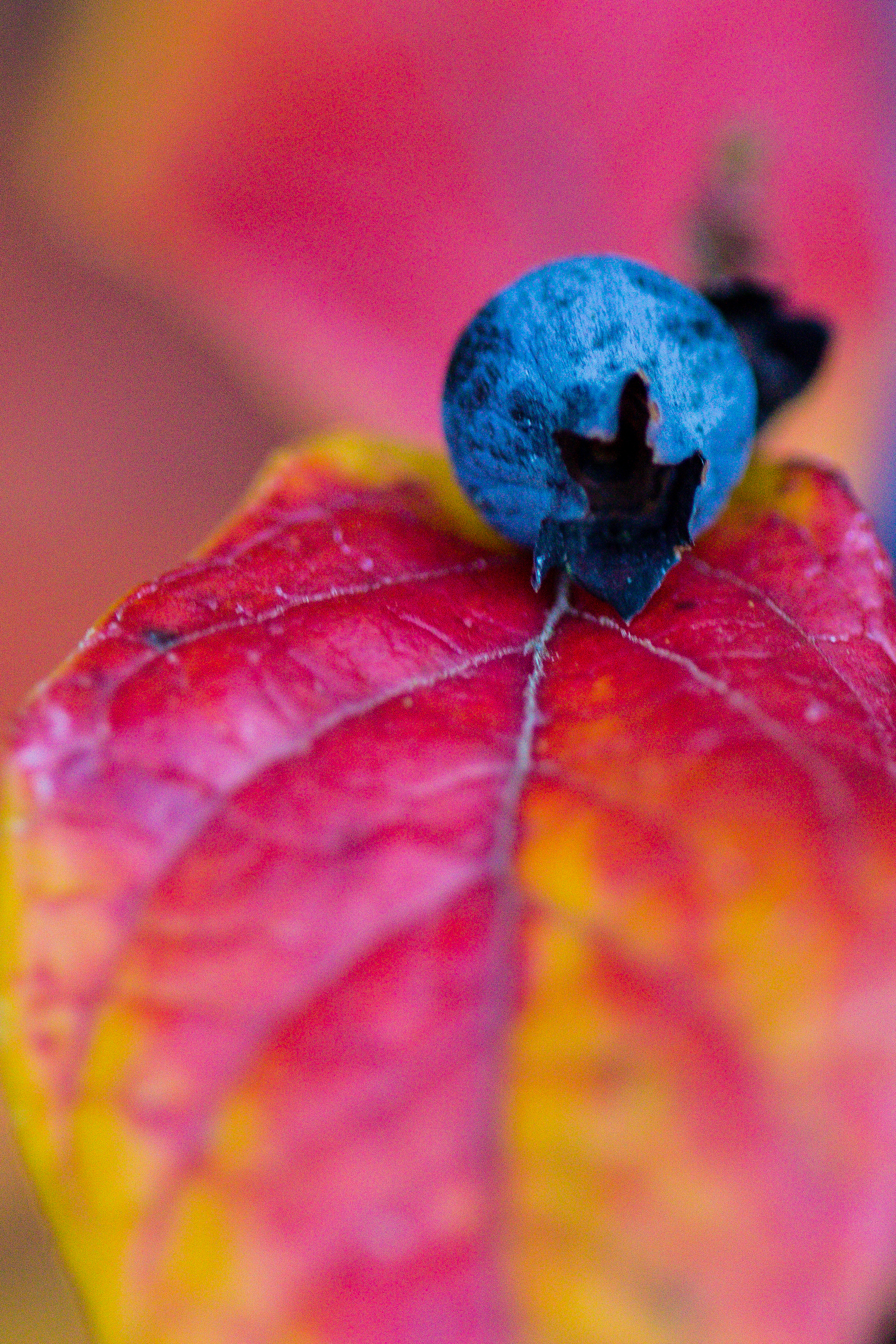 blueberryfall5.jpg