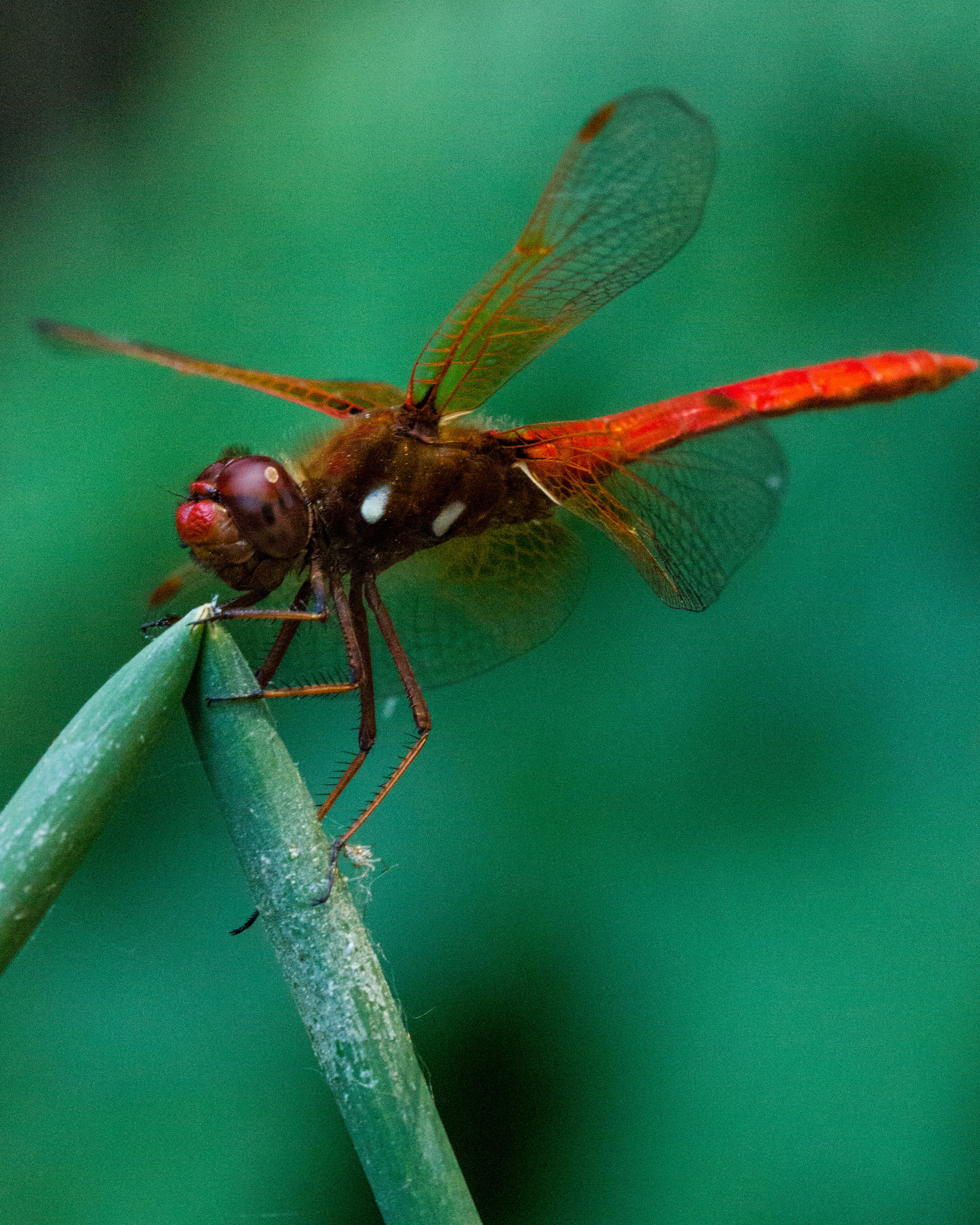 dragonfly25.jpg