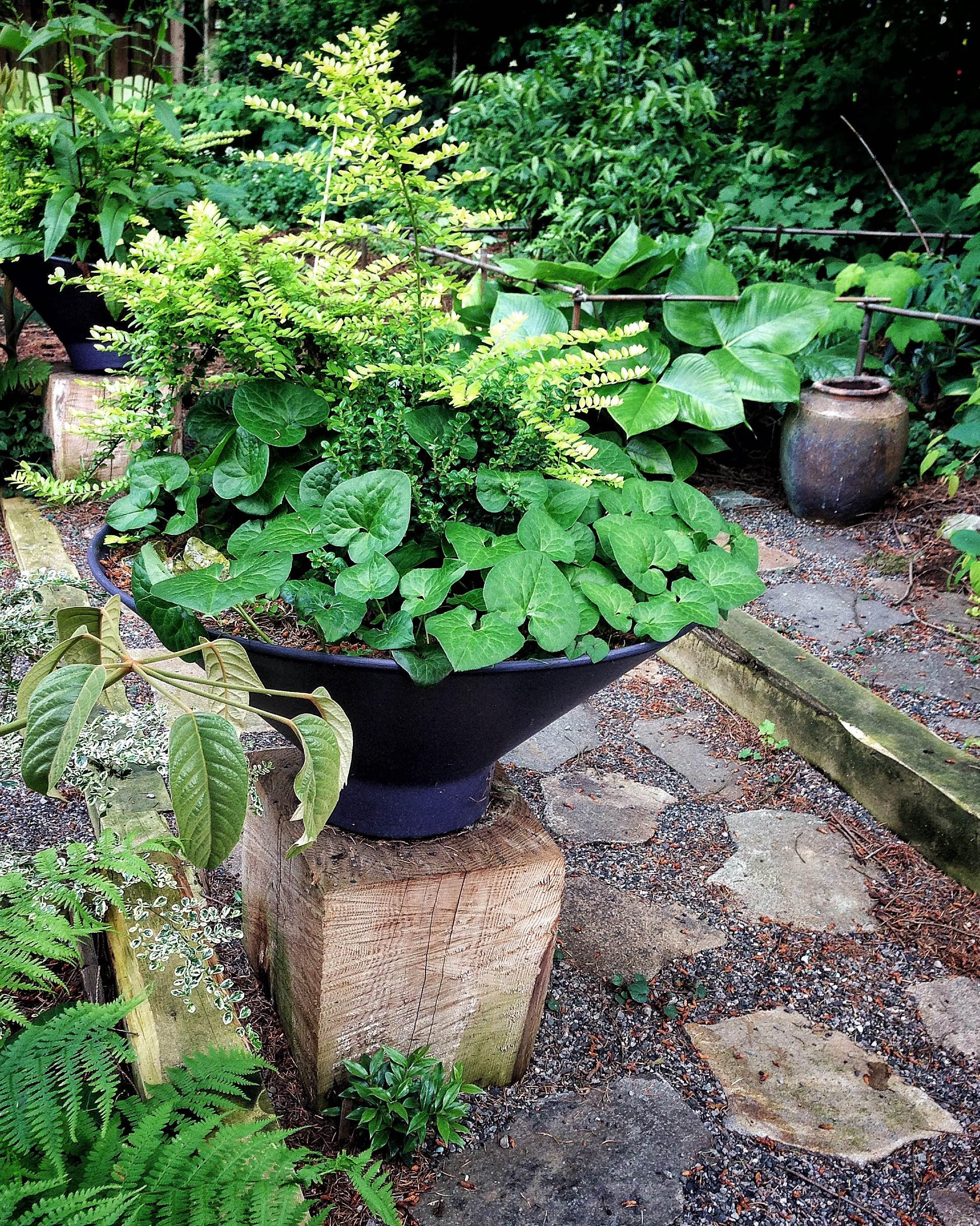 Fine Gardening Container Contest Winner in 2016