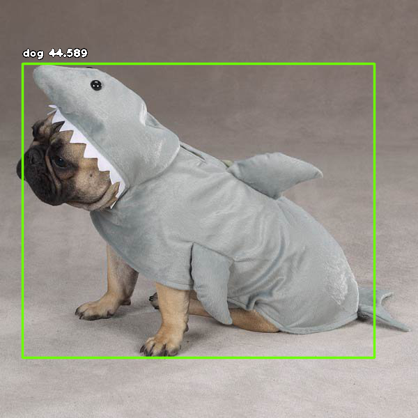 Dog in shark costume