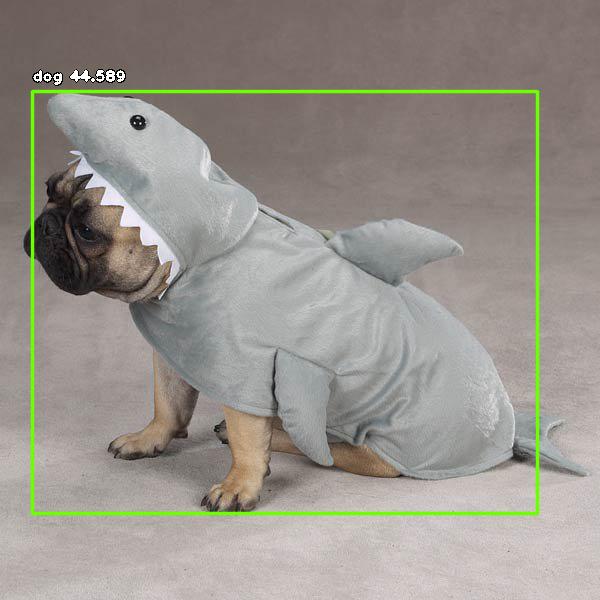 Dog in shark costume