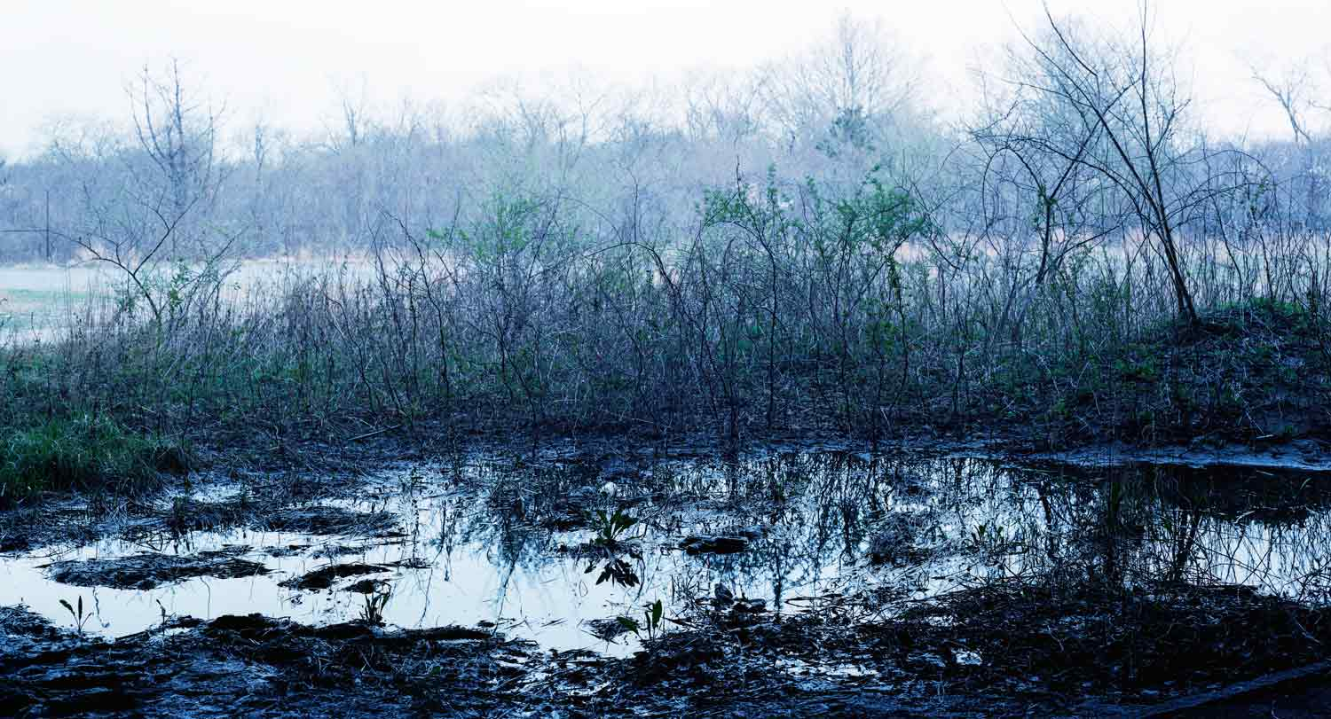 'Blue Swamp Waning' from the series  imaginary wars . c-print in oak frame, 20 x 37 inches