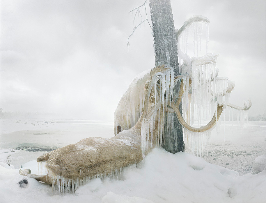 Simen Johan, Untitled #159, From the series Until the Kingdom Comes, C-Print, 2010. Opening at Yossi Milo Gallery on Thursday, Nov. 3.