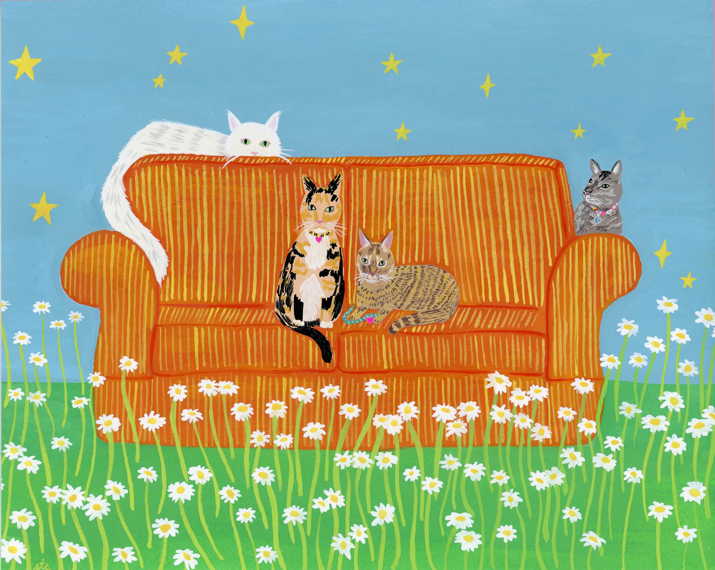 zabby cat portrait
