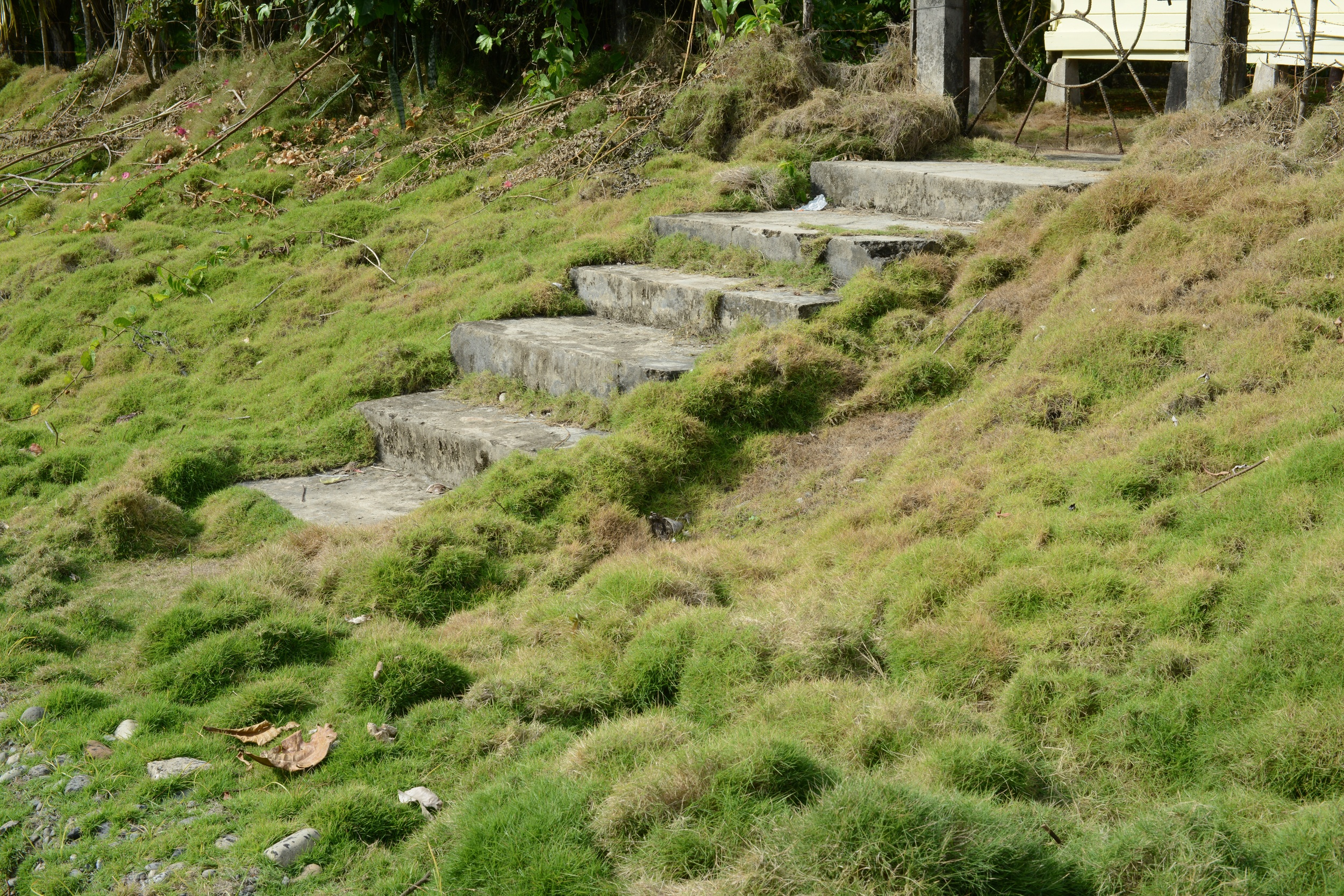 stairs in the meadow