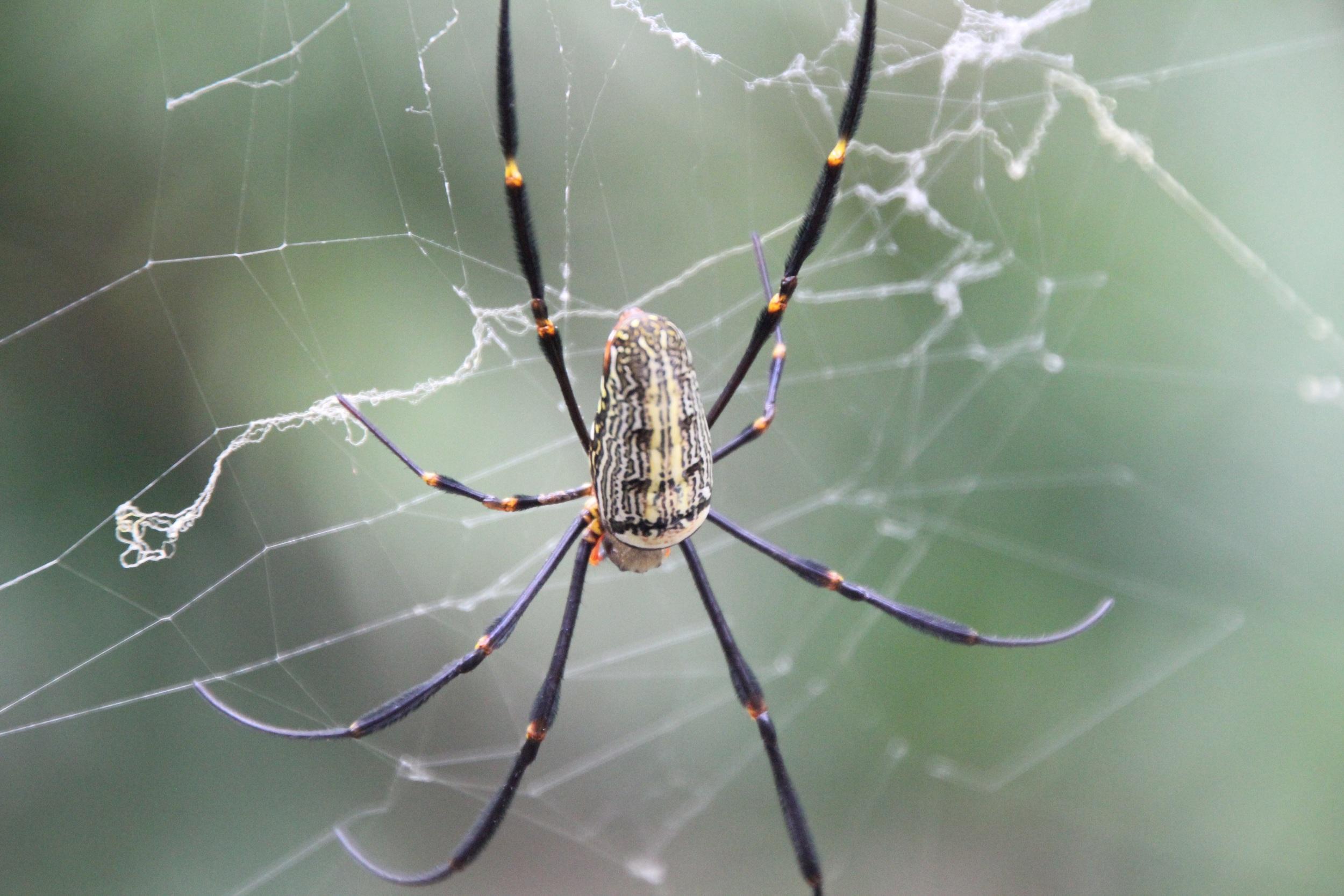 Einfangen. Wie diese handgroße Spinne.