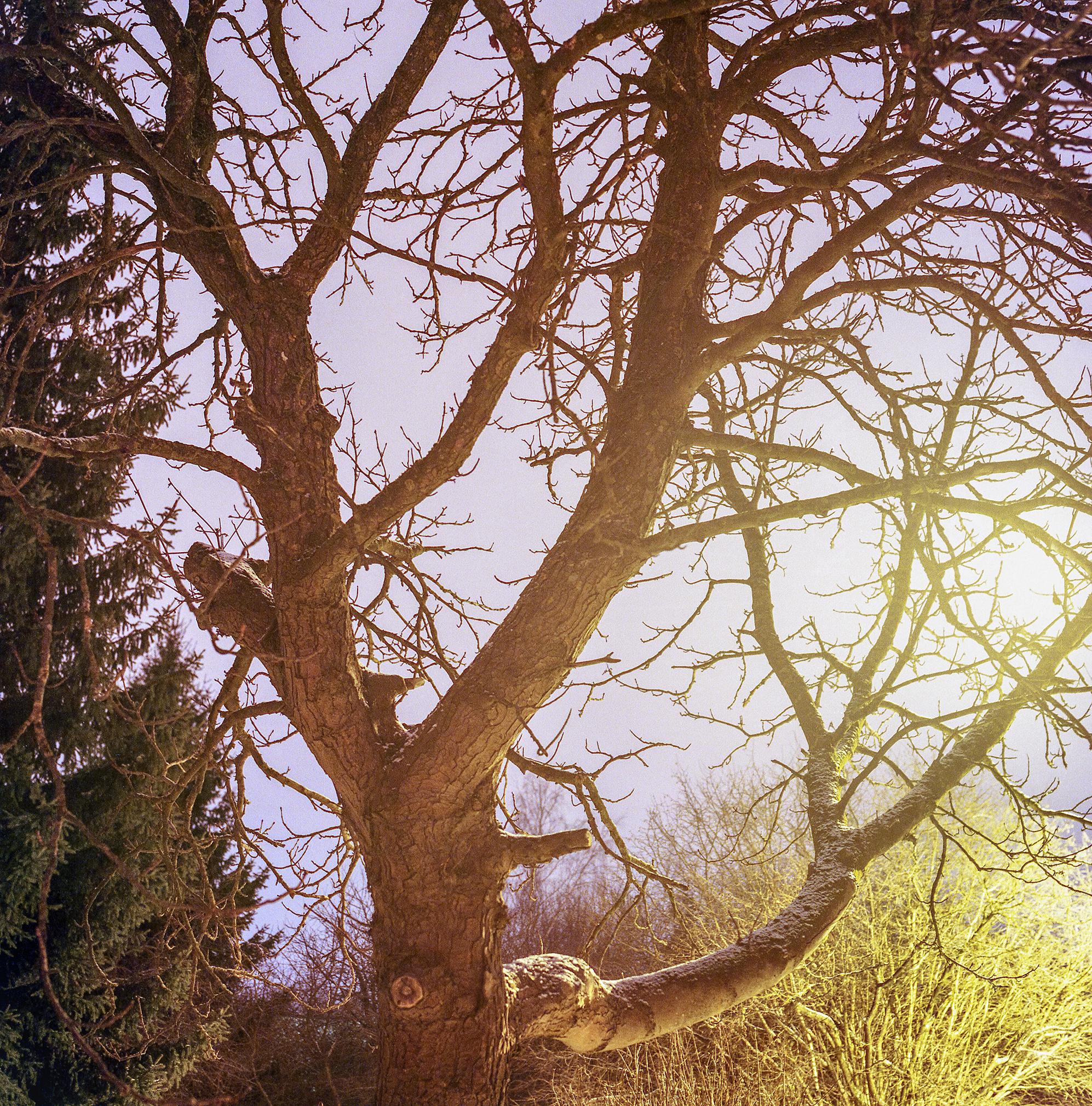 Tree Underneath a Streetlight
