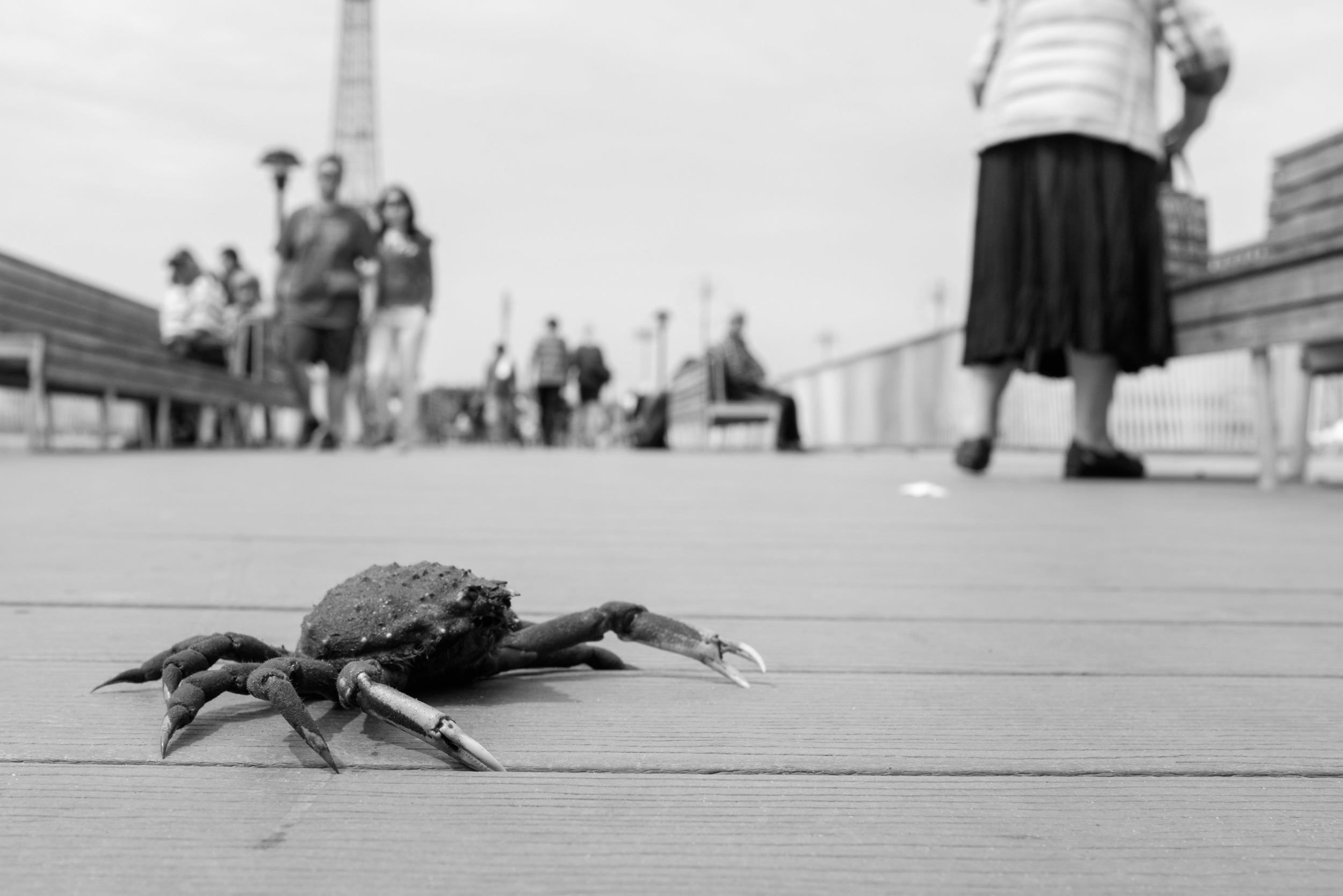 crabby.jpg