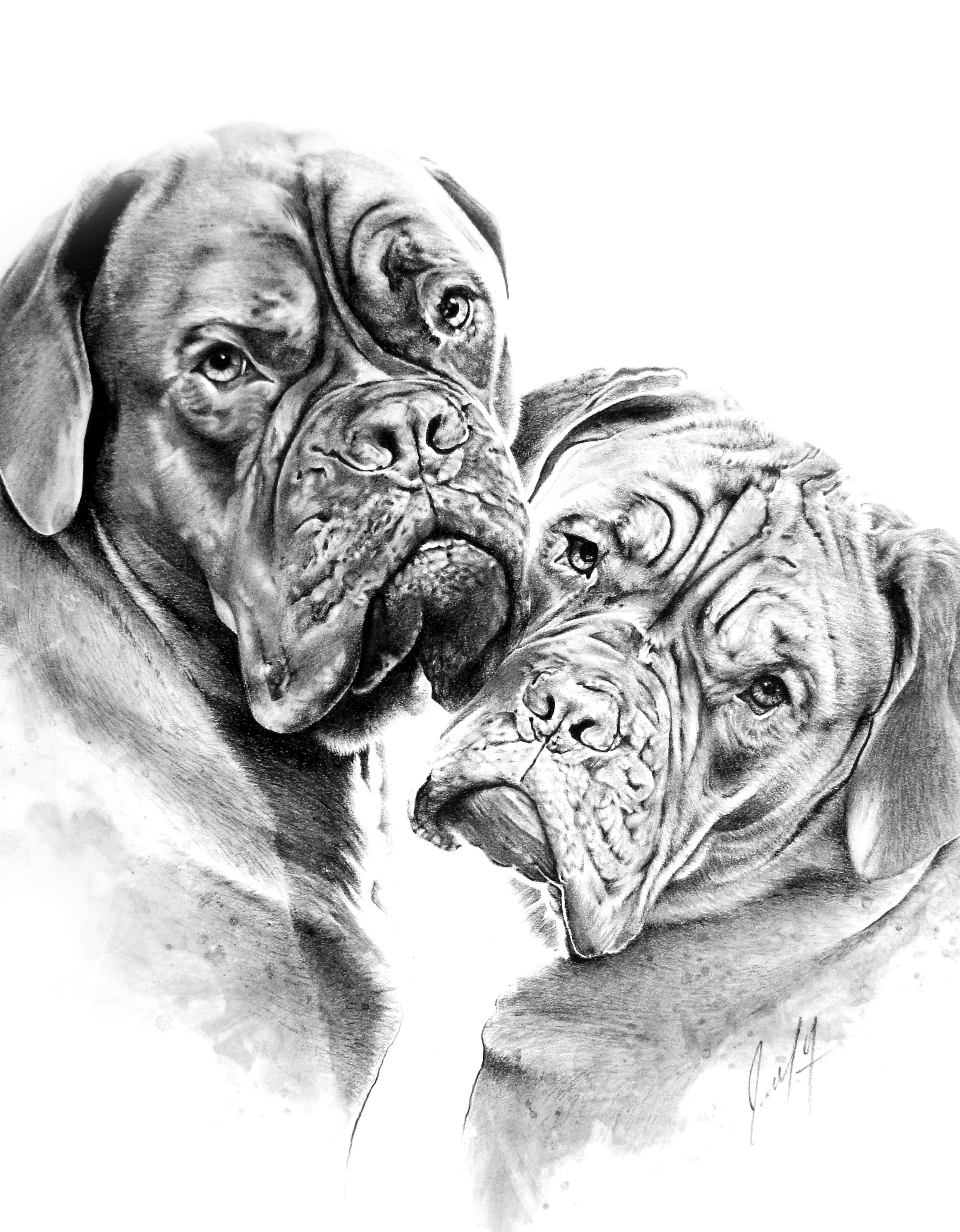 CHARCOAL DOGS