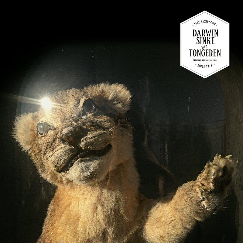 LionCubs-DSVT-3.jpg