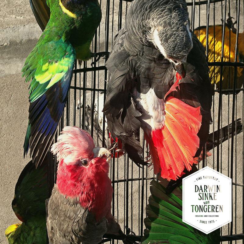 Macaw-Cage-DSVT-5.jpg