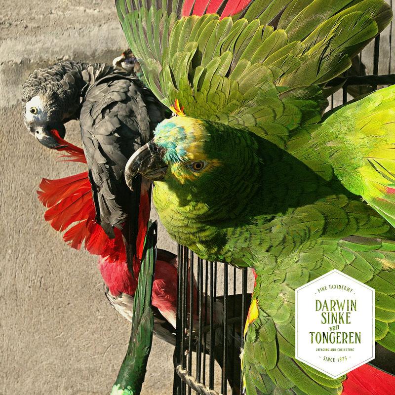 Macaw-Cage-DSVT-6.jpg