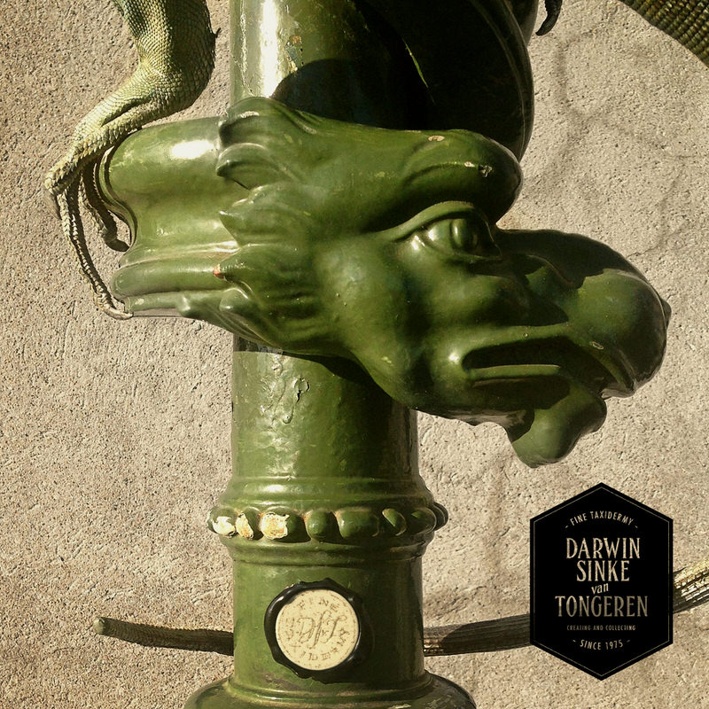 Green-Iguana-DSVT-5.jpg