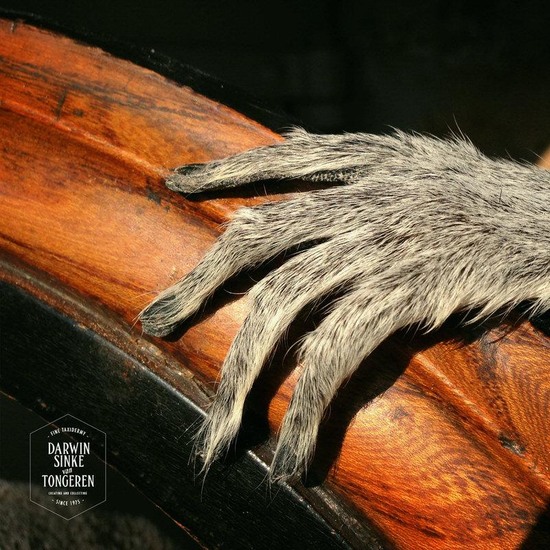 Lemur-Catta-DSVT_7.jpg