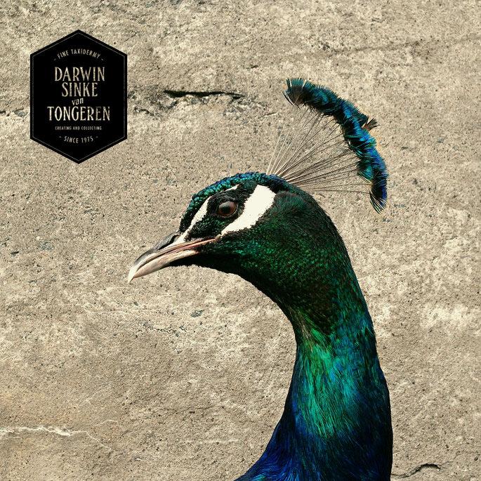 Detail-Peacock-1.jpg