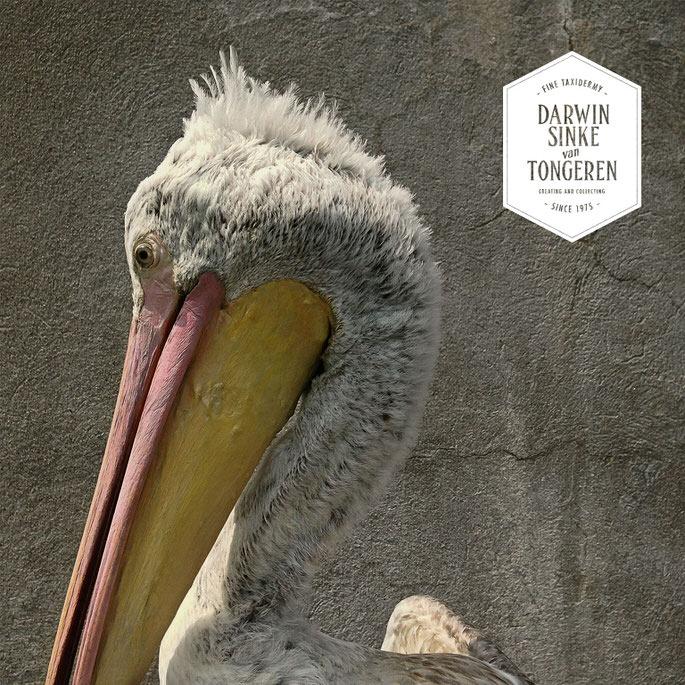 Detail-Pelican-1.jpg