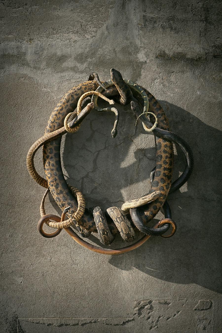Snakes-LR.jpg