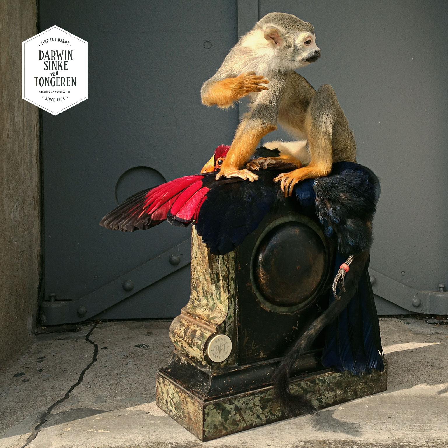 DSvT-Squirrell-Monkey-01.jpg
