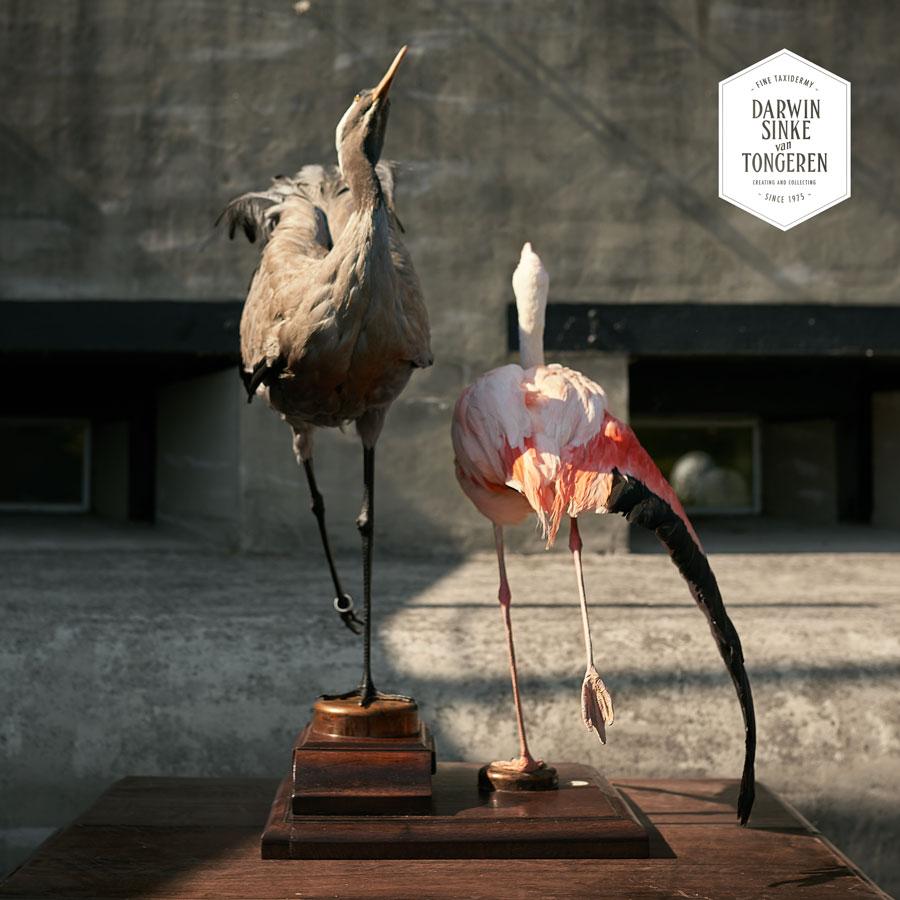 DSvT-Flamingo-Crane-3-LR.jpg