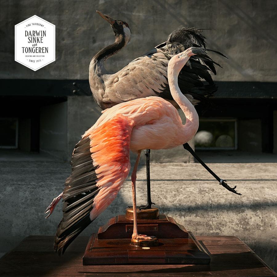 DSvT-Flamingo-Crane-2-LR.jpg