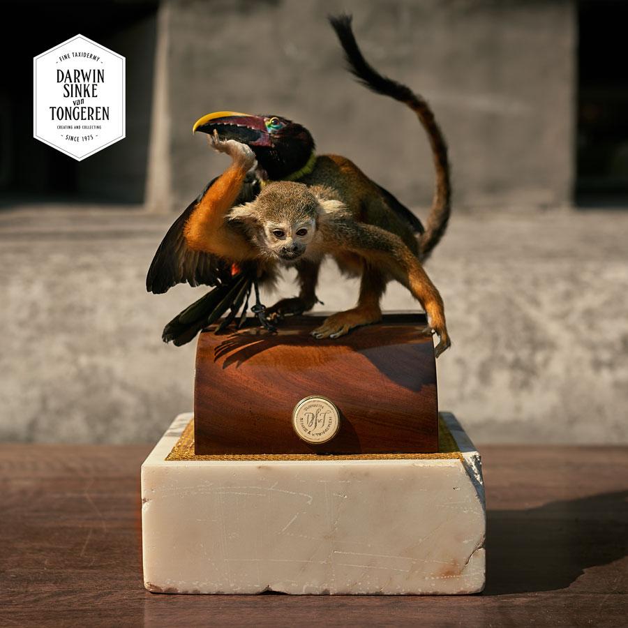 DSvT-Detail-Squirrel-Monkey-4-LR.jpg