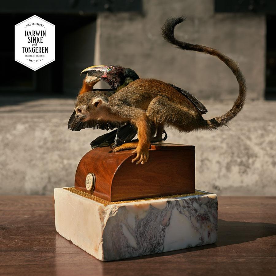 DSvT-Detail-Squirrel-Monkey-1-LR.jpg