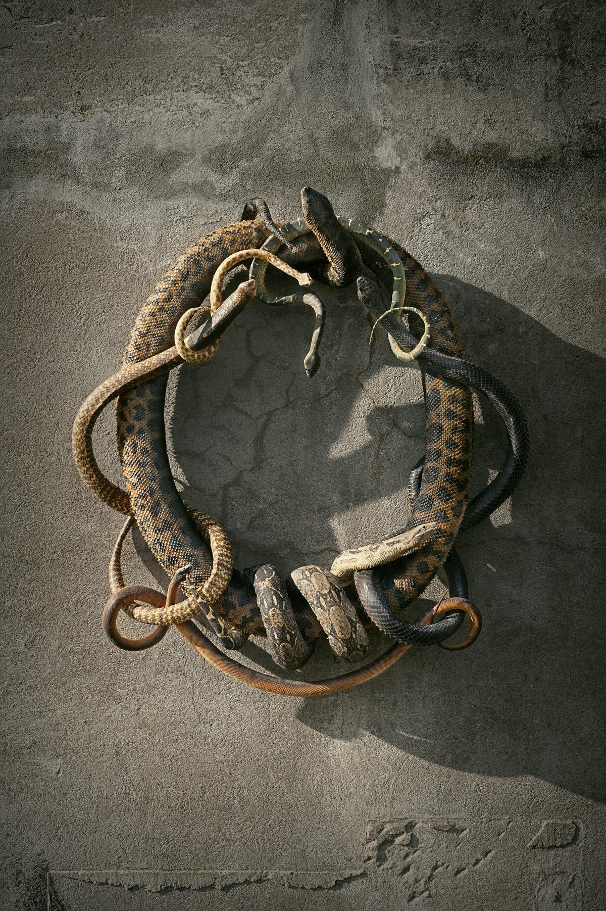 DSvT-Snakes-Hirst.jpg