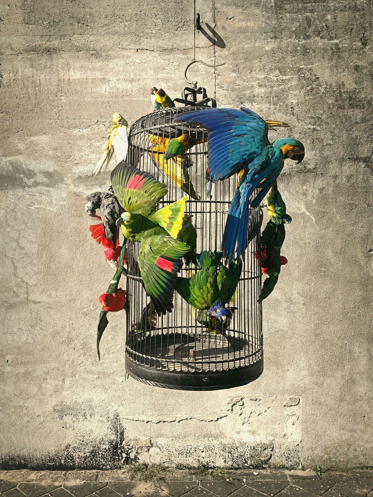 DSvT-Cage.jpg