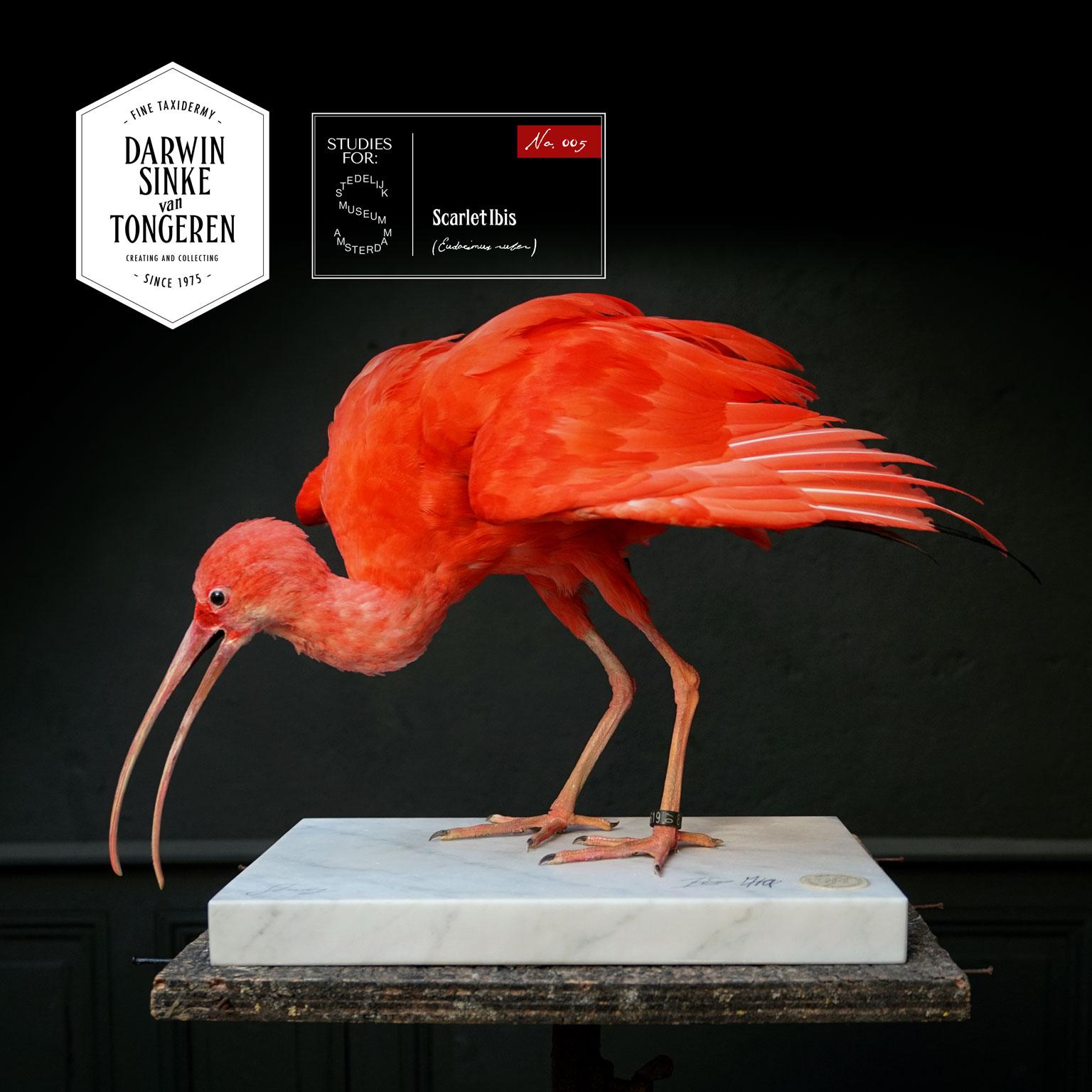 DSvT-Stedelijk-Study-Ibis.jpg