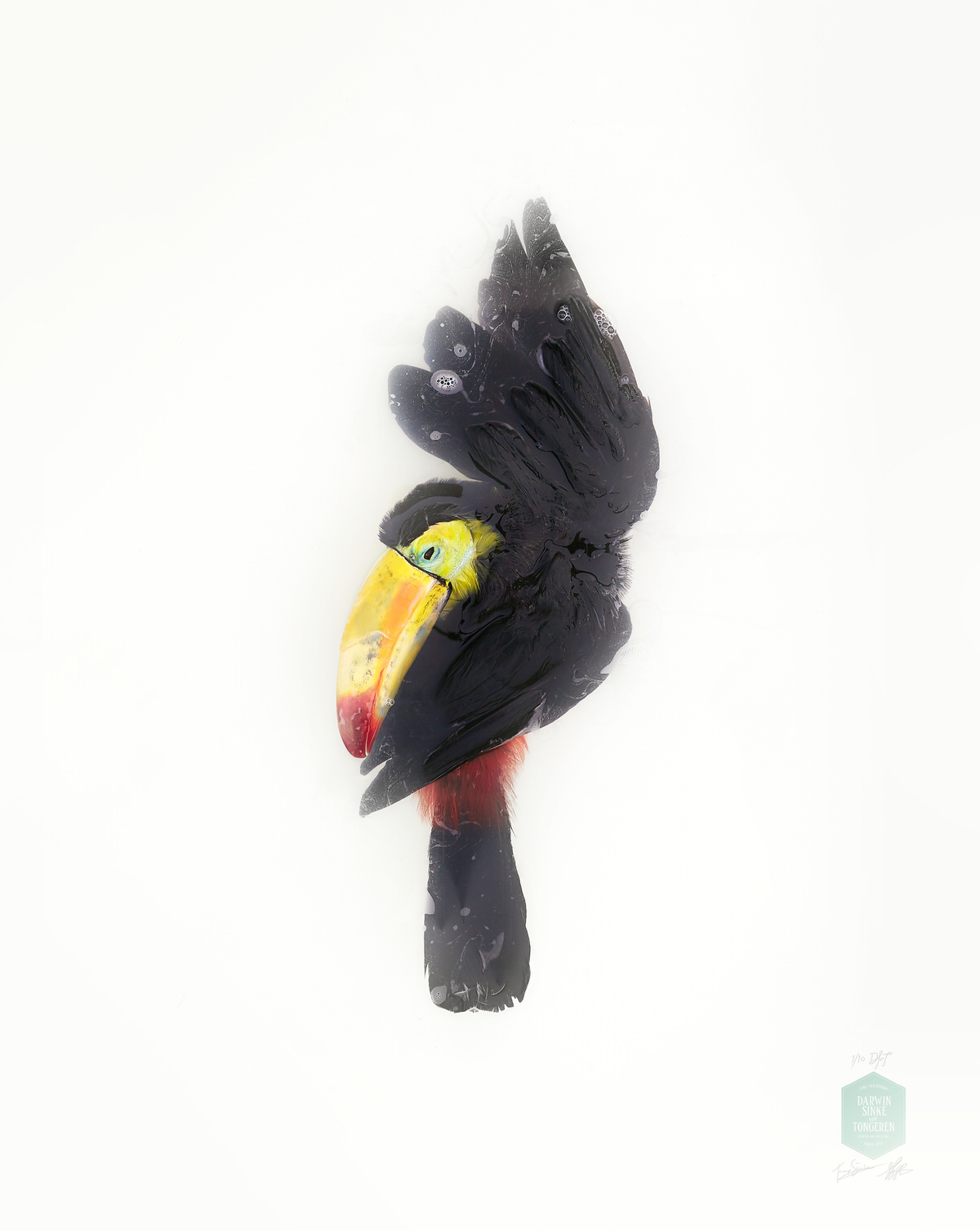 DSvT-Unknown Pose by Toucan.jpg