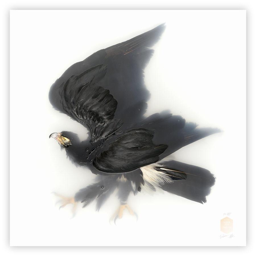 DSvT-Unknown Pose by-Black-Eagle.jpg