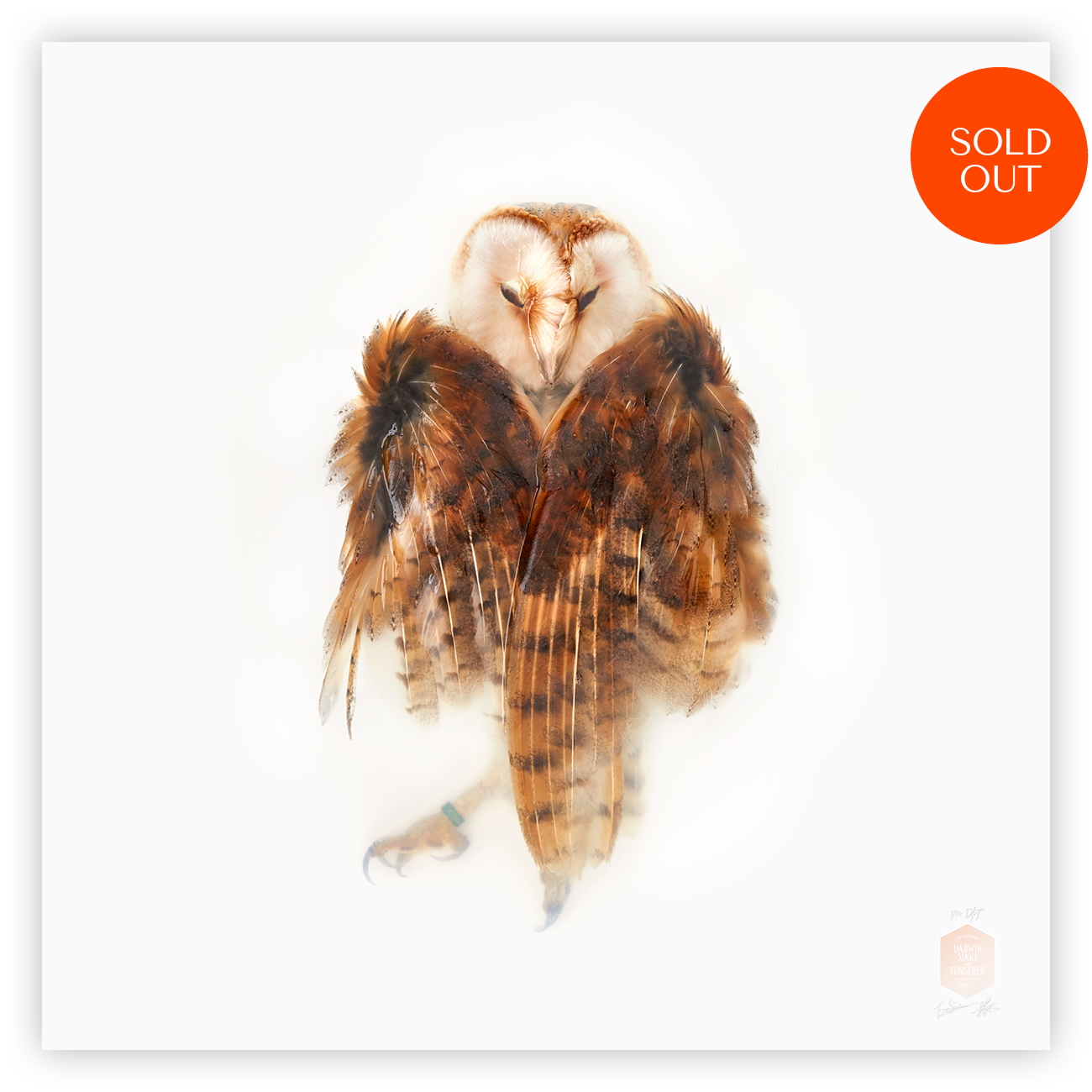 DSvT-Unknown Pose by-Barn-Owl.jpg