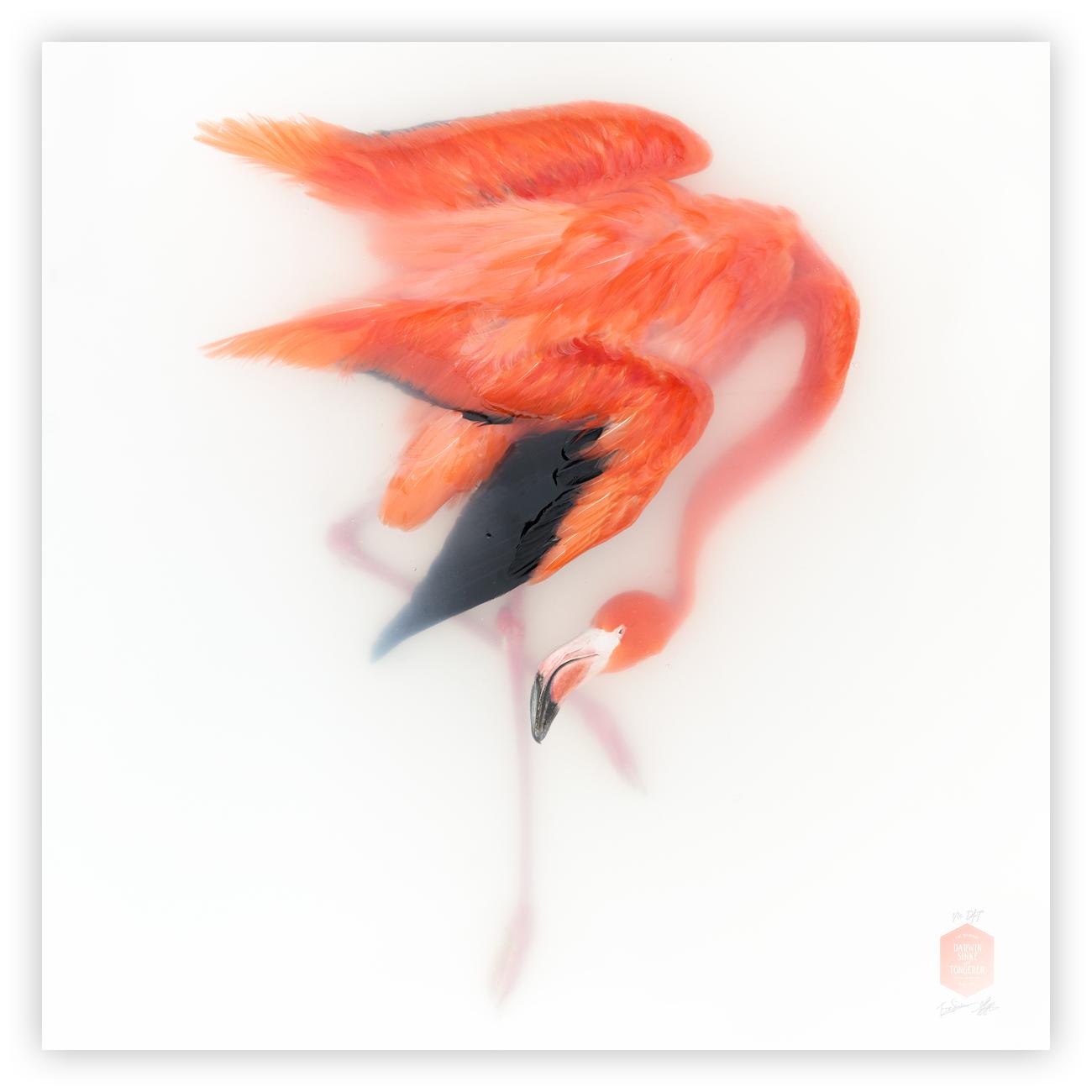 DSvT-Unknown Pose by-Flamingo.jpg