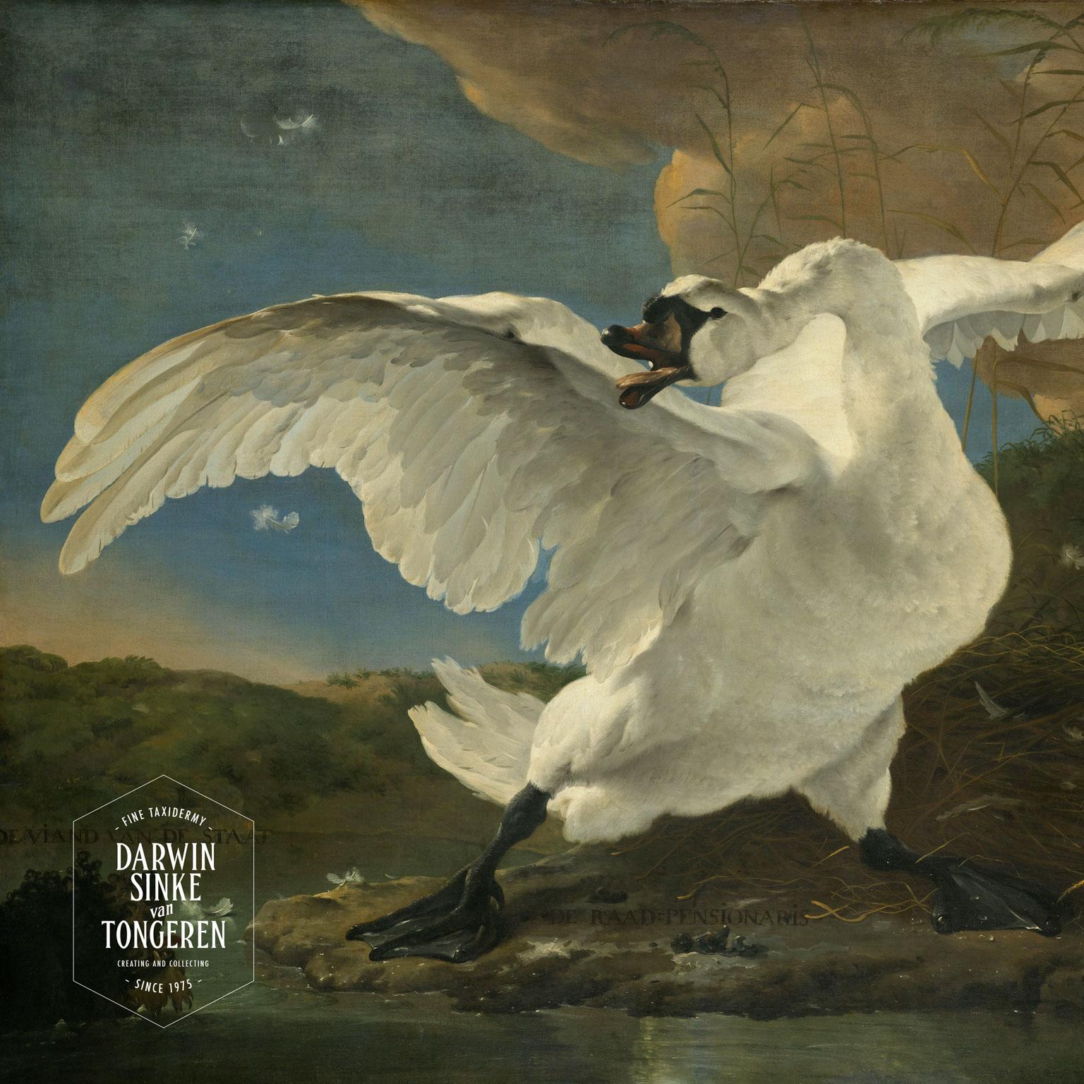 DSvT-Asselijn-Swan.jpg