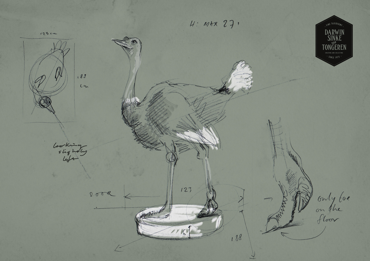 DSvT-Ostrich-Sketch.jpg
