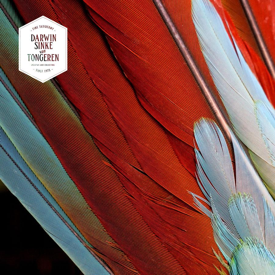 DSvT-BirdCage-Detail-4.jpg