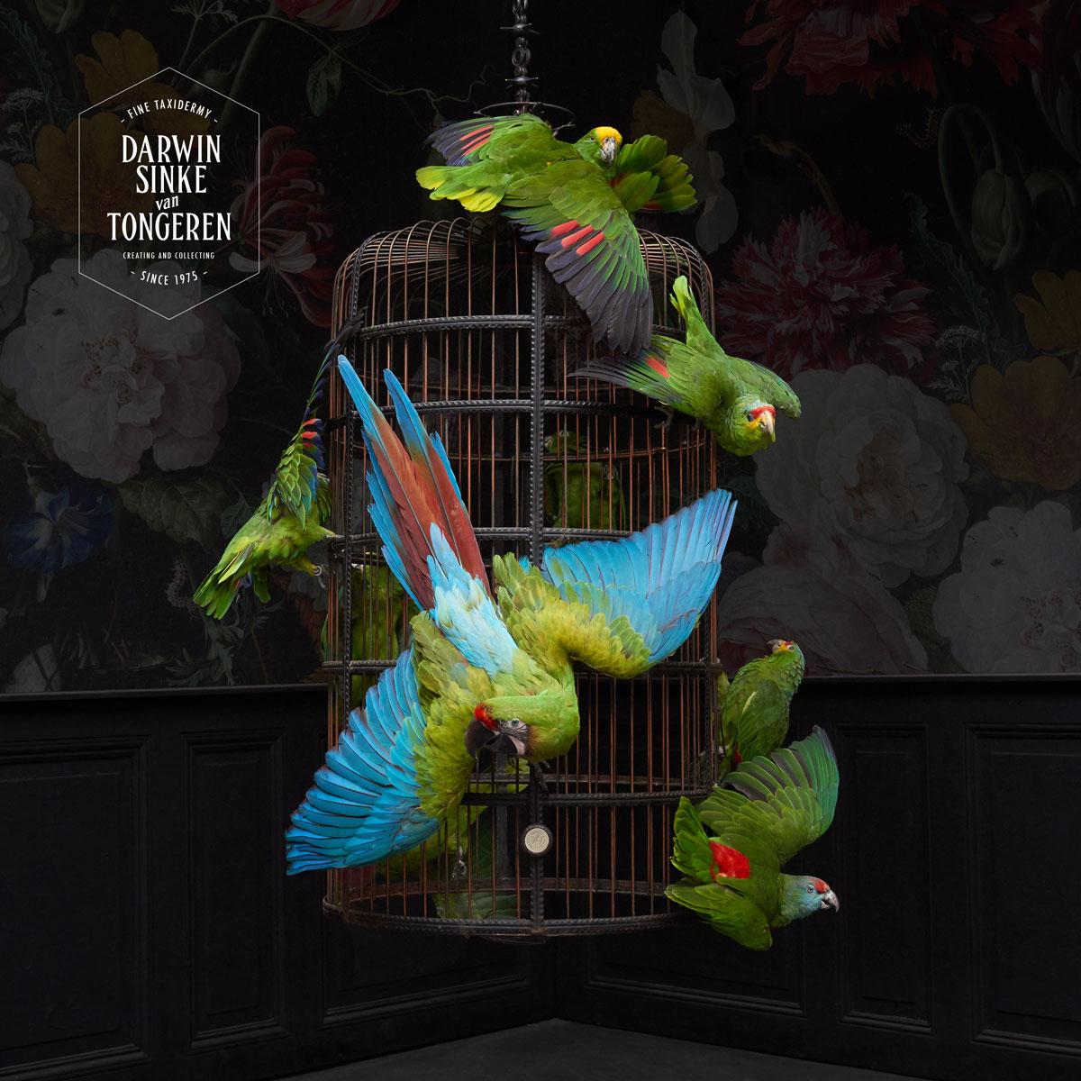 DSvT-BirdCage-Total-8.jpg