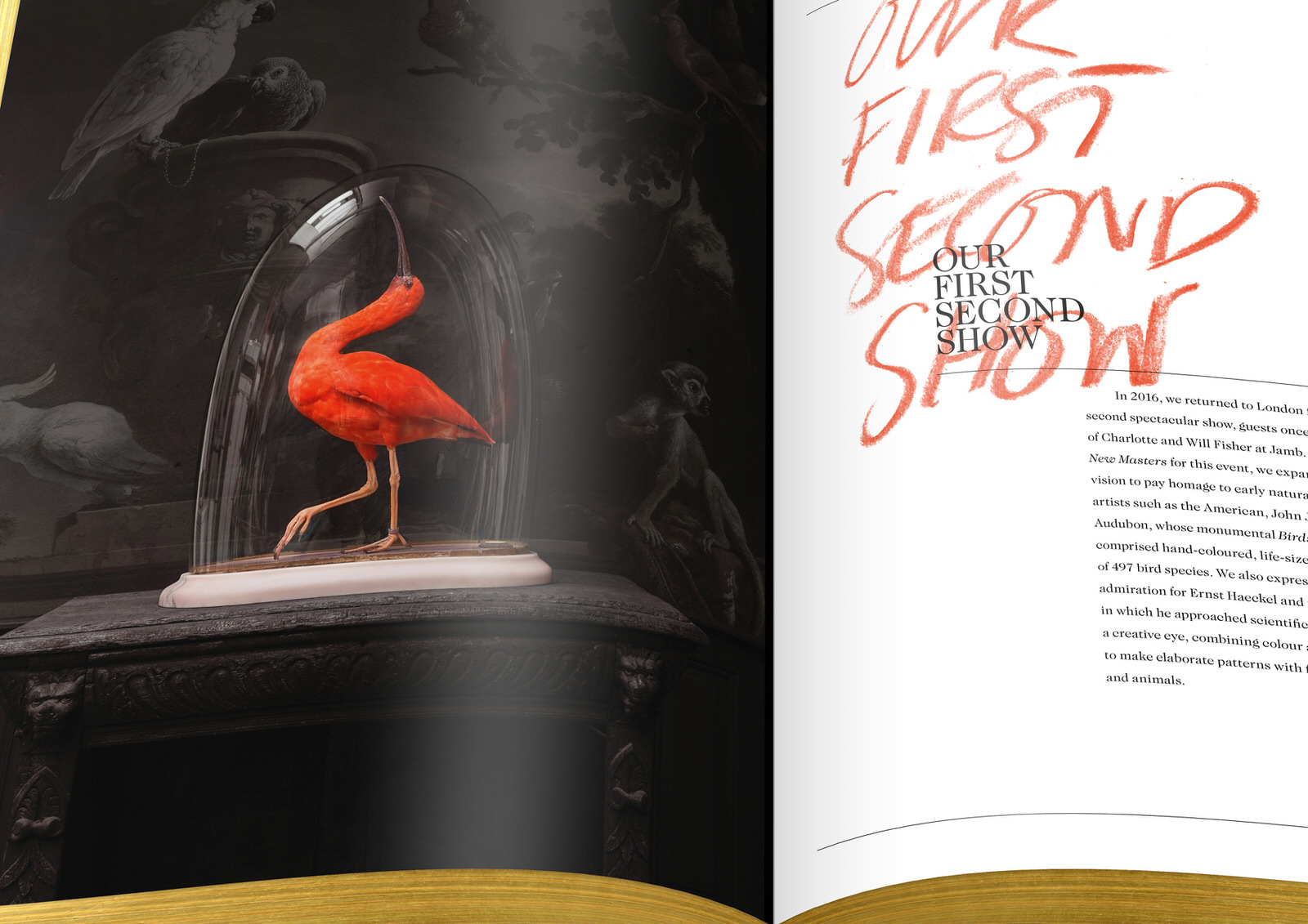 016-DSvT-Our-First-Book-Detail-Scarlet-Ibis.jpg