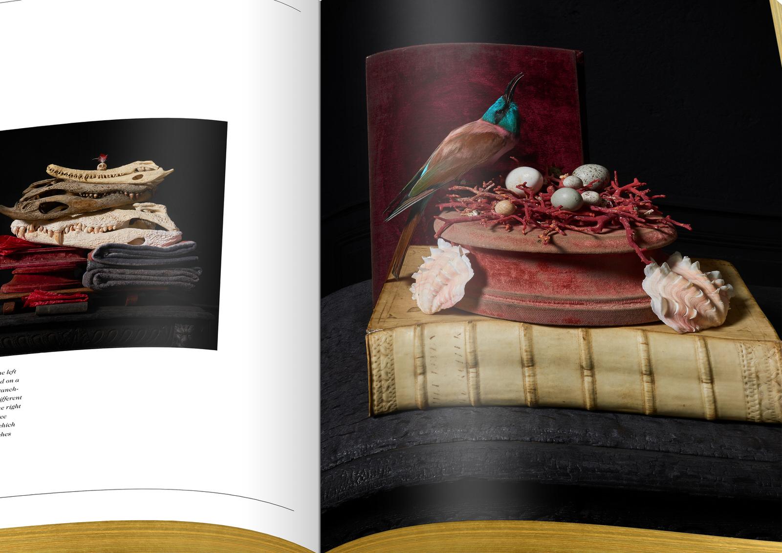 018-DSvT-Our-First-Book-Detail-Les-Peintures-Des-Taxidermistes.jpg