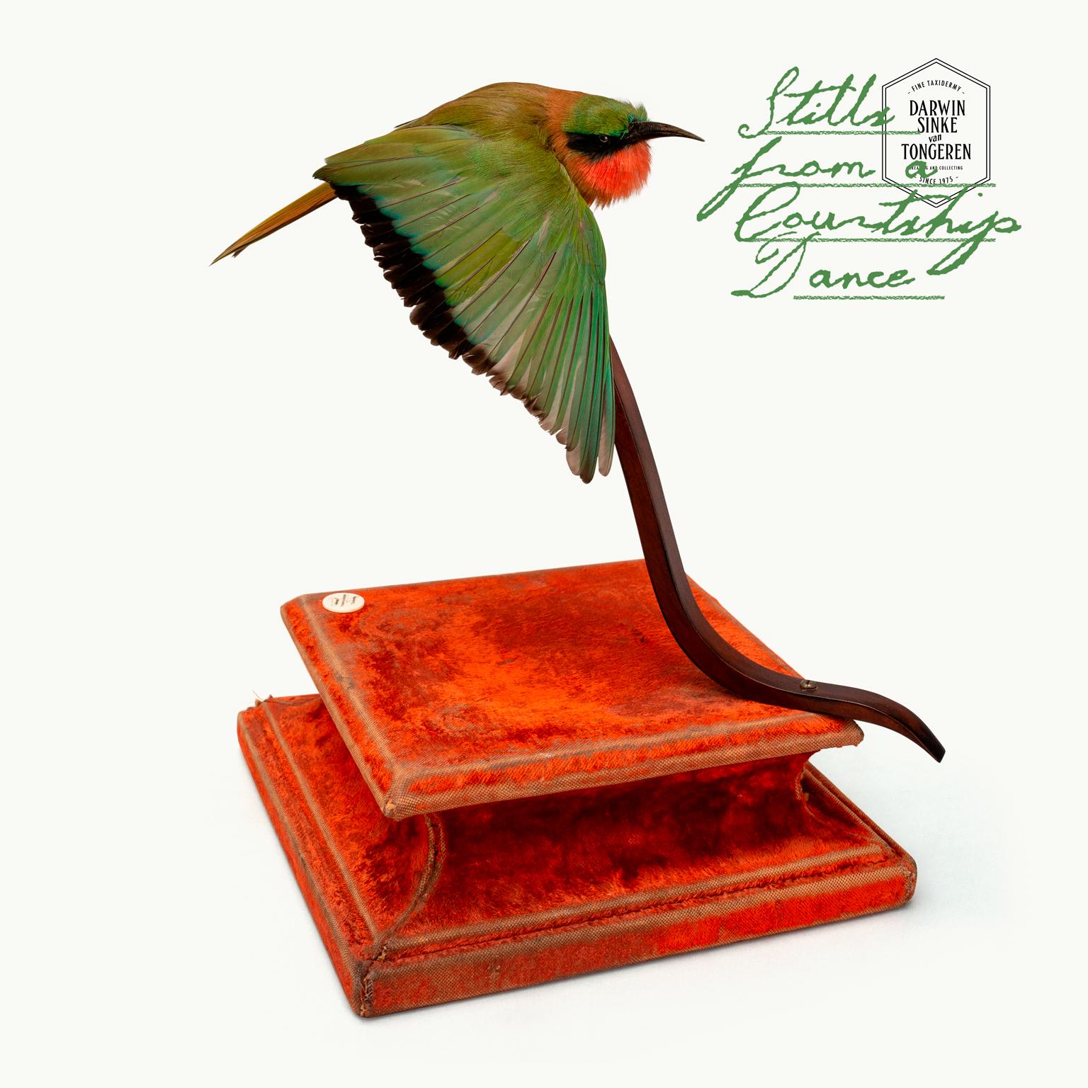 DSvT-Red-throated-Bee-eater-2.jpg